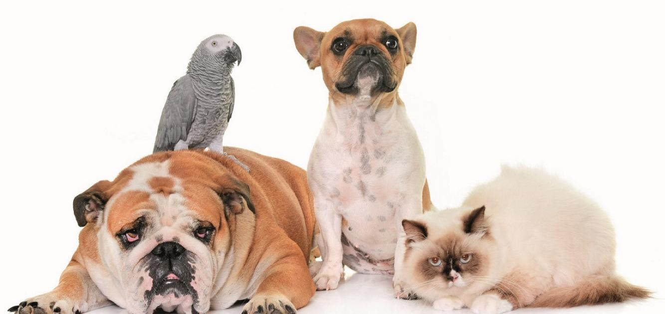 آشنایی با انواع نژاد ها بیمارستان دامپزشکی My Pet